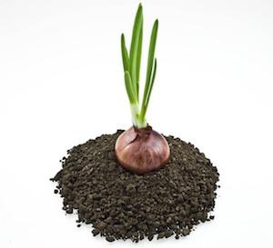 плодородный грунт